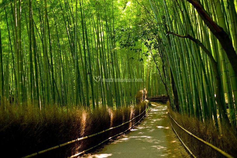 Foresta di bambù,  Giappone