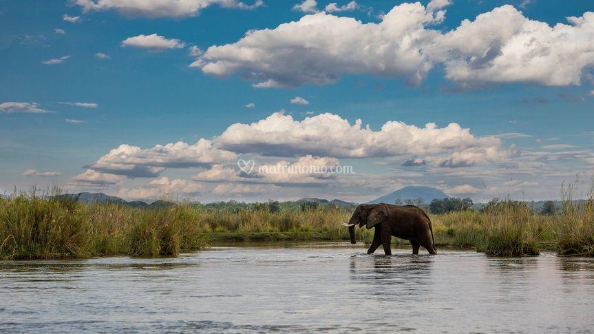 Avventurori Safari