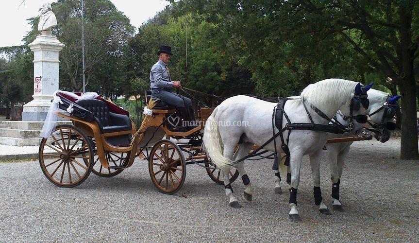 Carrozza con cavalli bianchi