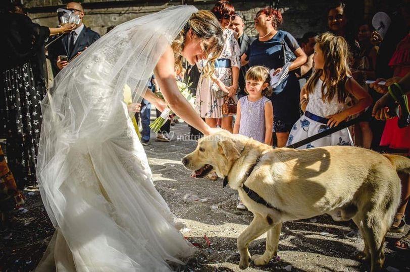 Elena WeddingDog Sitter