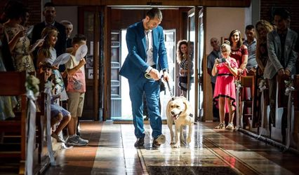 Elena WeddingDog Sitter