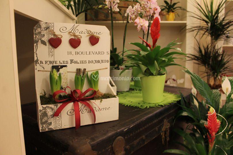 Fiori e colori di claudia morari - Cerco piante da giardino in regalo ...