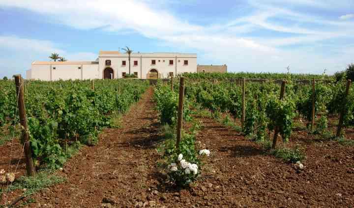 Wine Resort veduta sui vigneti