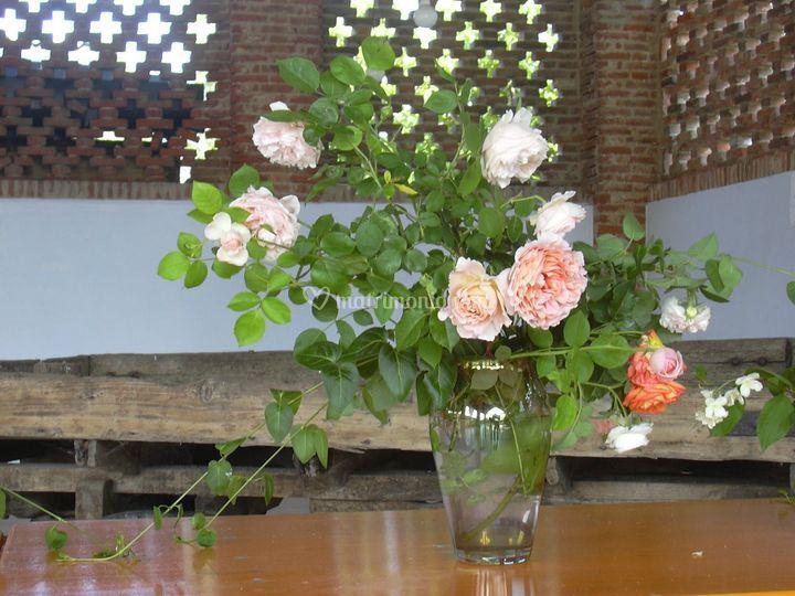Le nostre rose inglesi