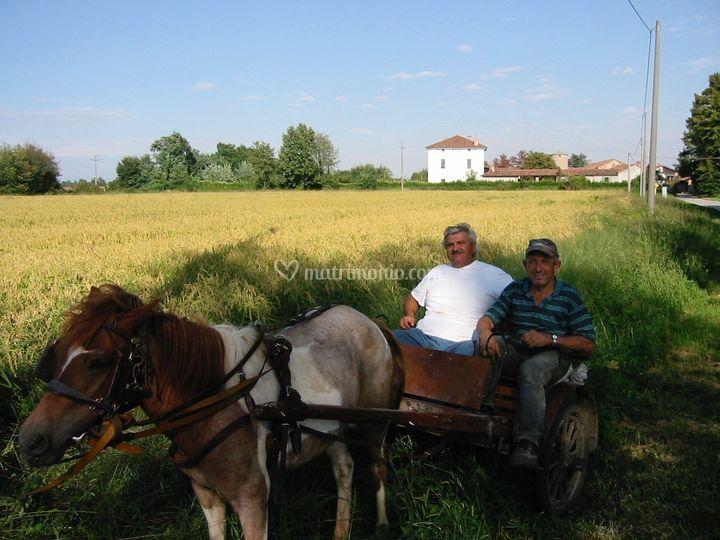 Agricoltori sul calesssino