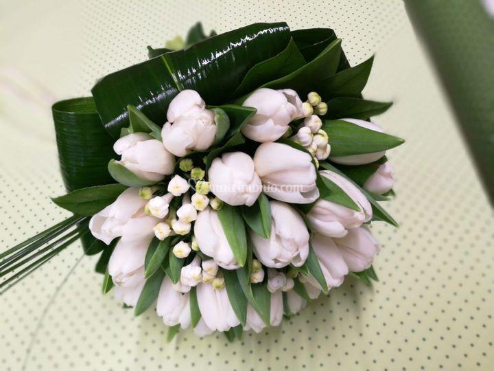 Tulipano e bouvarda