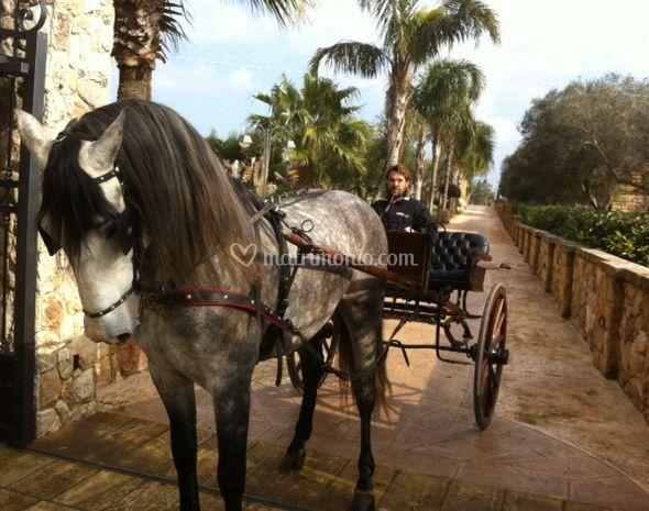 Cavalli e cocchiere