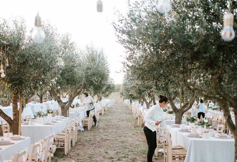 Under olive trees wedding