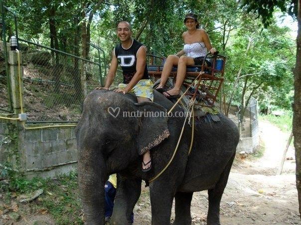 Gita con l'elefante