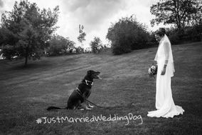 Just Married Dog