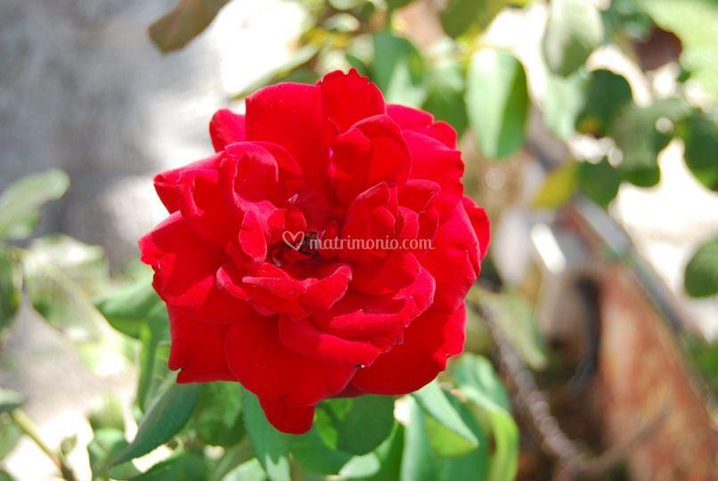 Un fiore per voi!