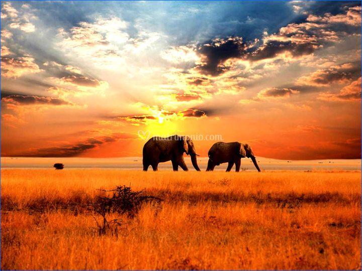 Tramonto Elefanti Botswana
