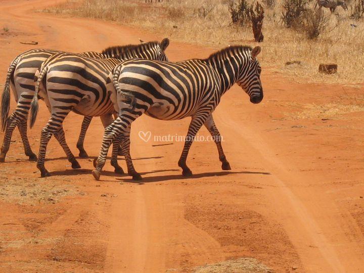 Natura e safari