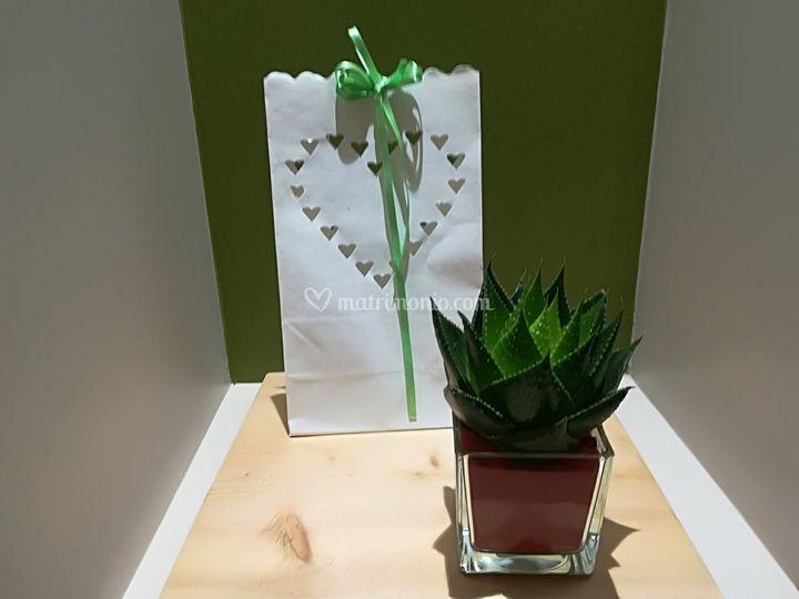Aloe cosmo e bag carta