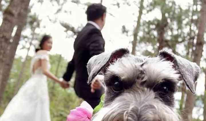4 Zampe al Matrimonio