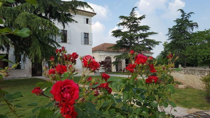 Rose in fiore