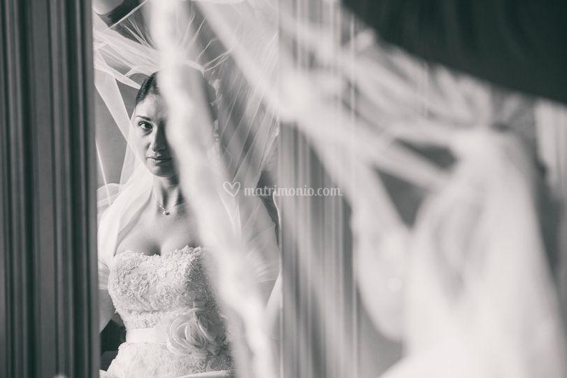 Sannino fotografi - Cane allo specchio ...