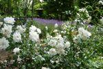 Fioriture giardino di Villa C� Bianca