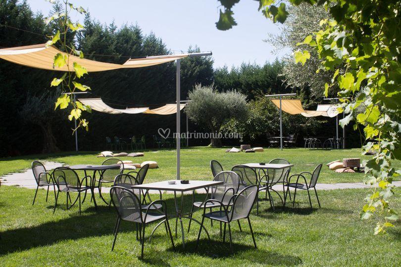 Il giardino di ulivi