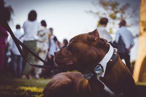 Dog sitter per Matrimoni Athena
