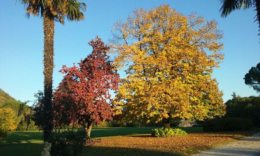 L'autunno... colore e allegria!