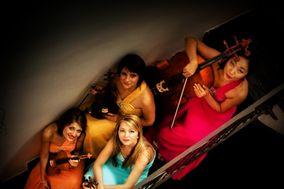 Dammen - Quartetto d'archi femminile