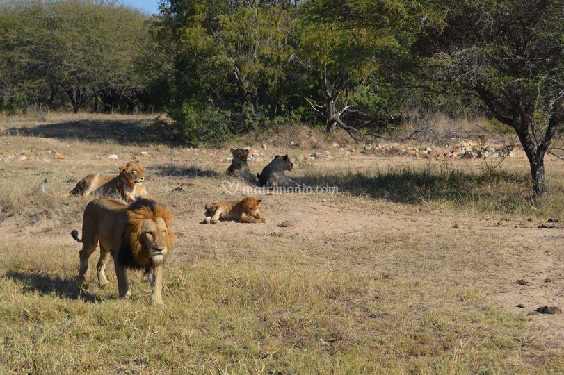 Kruger Park,. South Africa