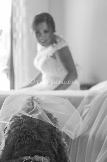 BAUtopia Wedding