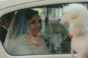 Bautopia Wedding Dog Sitter