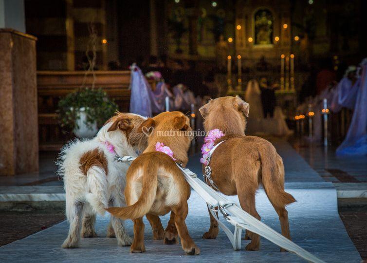 Wedding Dog Sitter Reggio