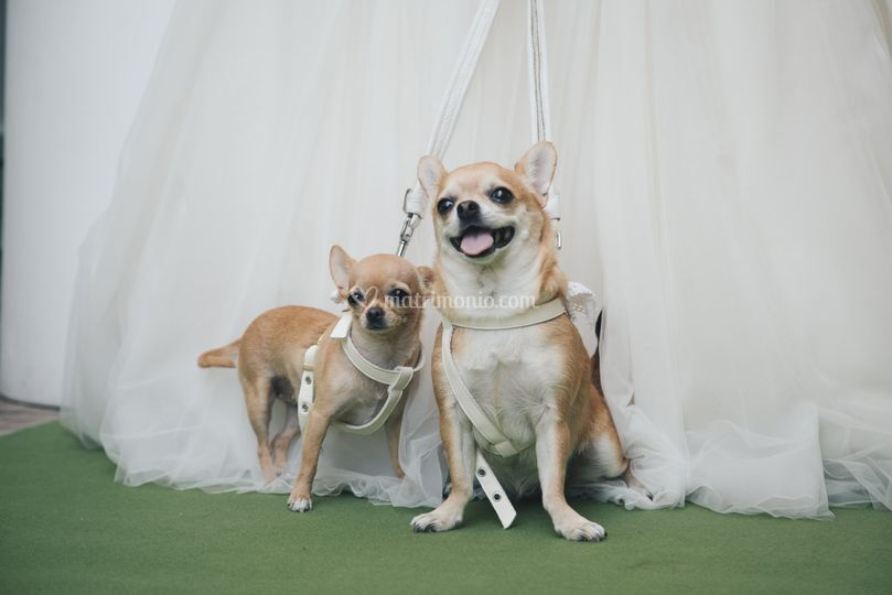 Wedding Dog Sitter Salerno