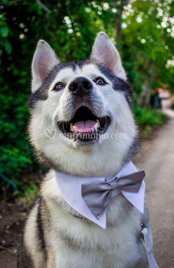 Wedding Dog Sitter Campania