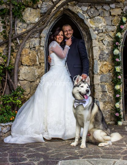 Wedding Dog Sitter Amalfi
