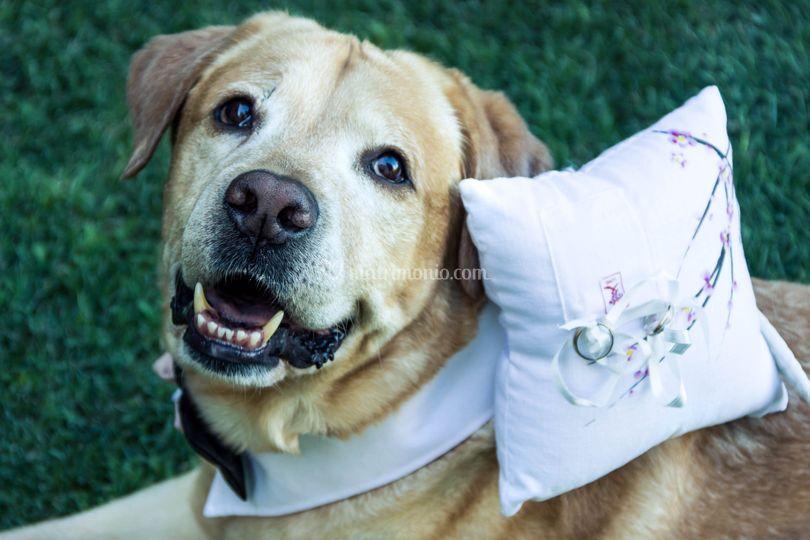 Wedding Dog Sitter Bracciano