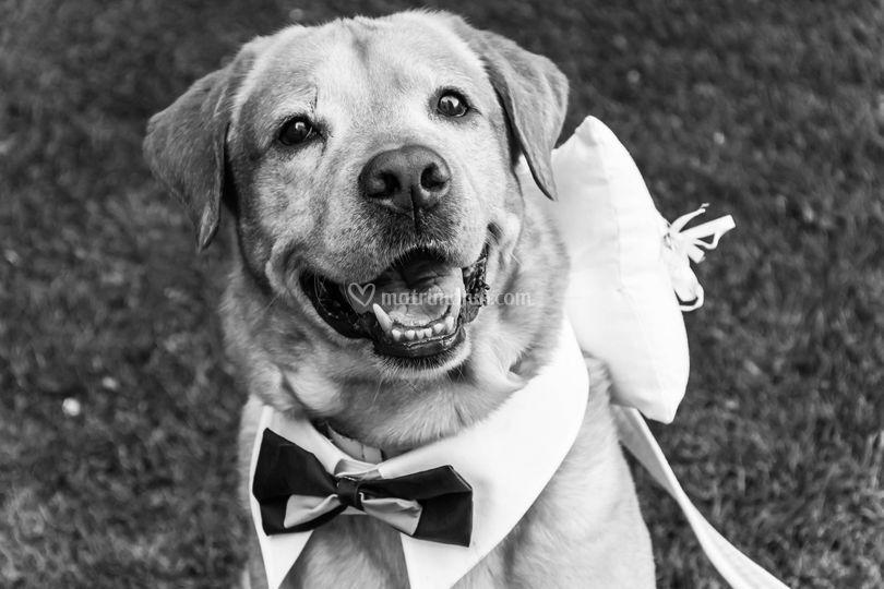 Wedding Dog Sitter Roma