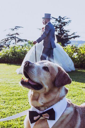 Wedding Dog Sitter Bologna
