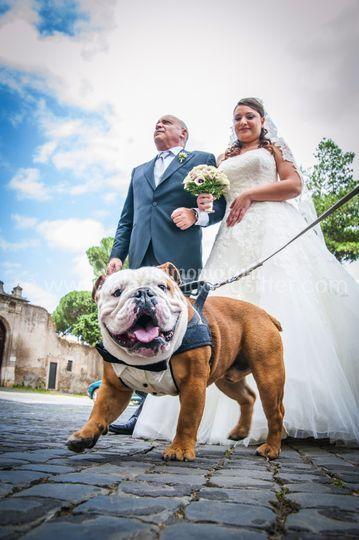 Sposa con il cane