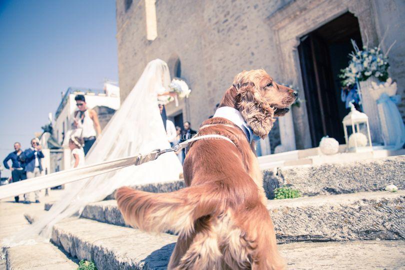 Wedding Dog Sitter Bari