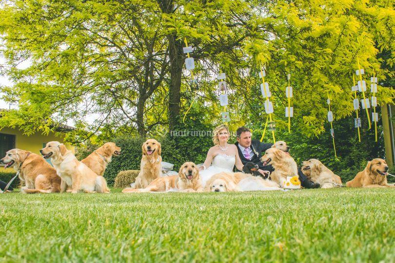 Matrimonio cane