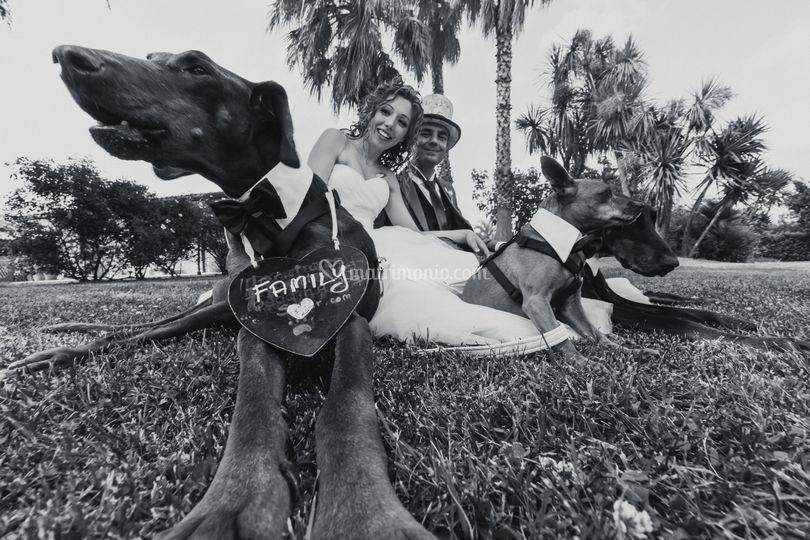 Wedding Dog Sitter Emilia