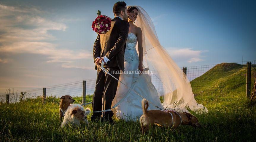 Wedding Dog Sitter Calabria