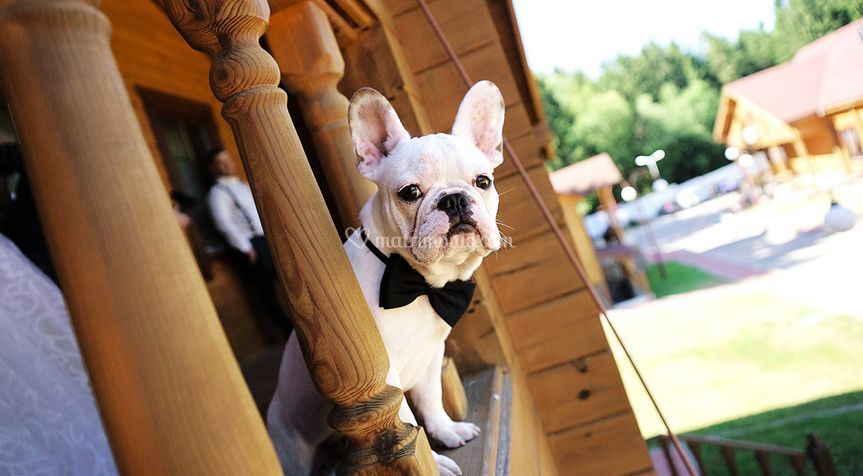 Wedding planner l'Aquila