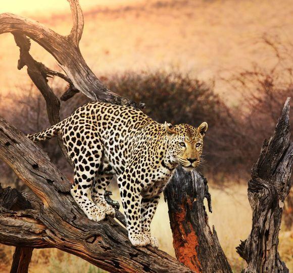 Kruger NP - Sudafrica