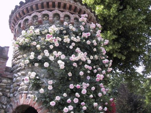 Le nostre rose antiche