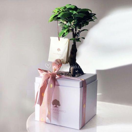 Bonsai Nature