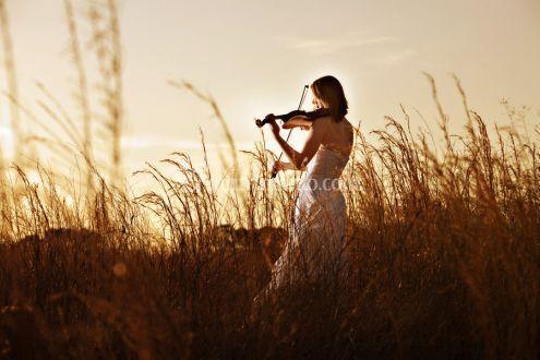 Violino campo