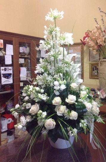 Orchidea Piante e Fiori