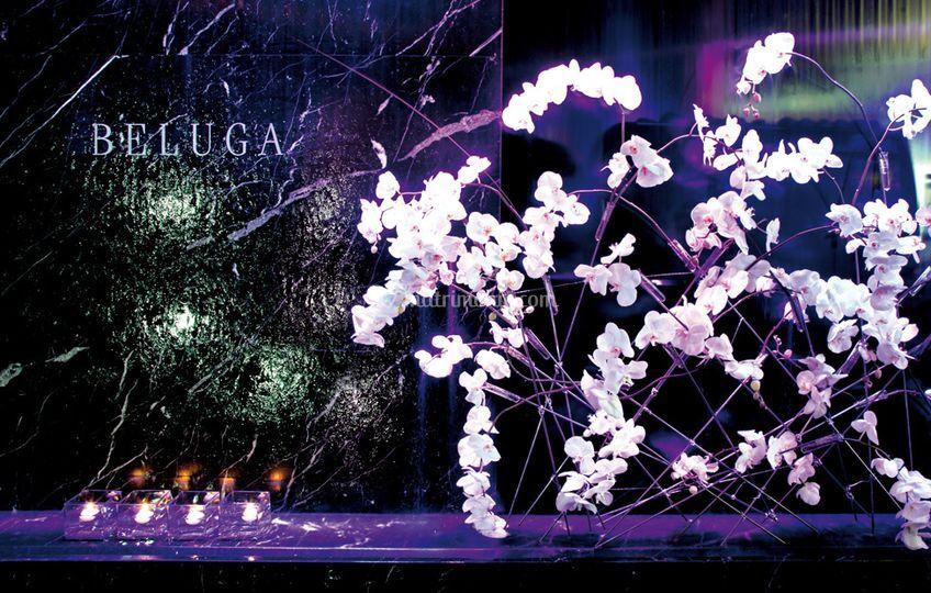 Sala eventi Beluga dettaglio