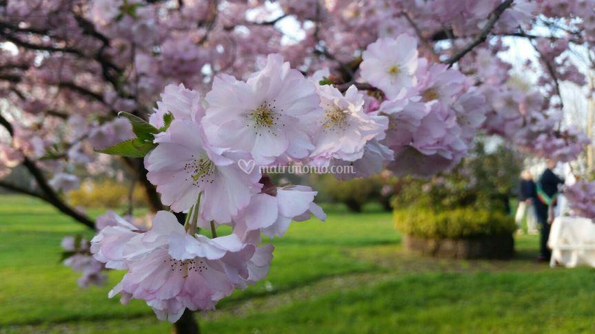 Viva i fiori