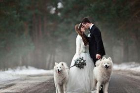Seguimi Wedding Dog Service